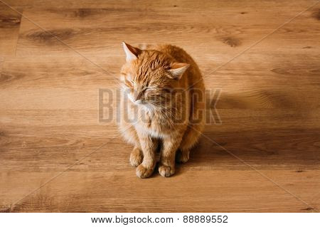 Red Cat Sitting On Laminate Floor