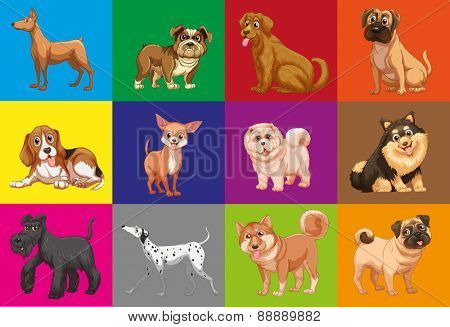 Different type of dogs in colored squares