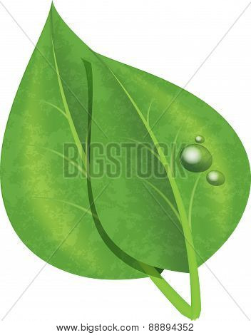 Isolated green leaves with drops of dew. Vector illustration for your design or tattoo.