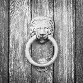 stock photo of lions-head  - Lion head on wood - JPG