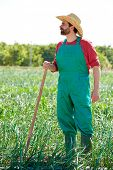 image of hoe  - Farmer man working in onion orchard field with hoe tool - JPG