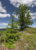 stock photo of ural mountains  - The Republic of Bashkortostan - JPG