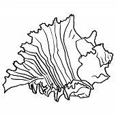 stock photo of beach shell art  - Marine hand drawn shell - JPG