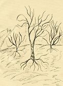 image of dead-line  - Grunge sketch of a stylized dead tree hand drawn illustration - JPG