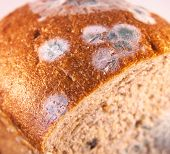 image of crust  - Crust and crumb of a bread - JPG