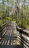 foto of virginia  - Wooden walkway over the swamp in First Landing State Park - JPG
