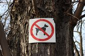 foto of excrement  - Sign prohibiting dog walking in a park - JPG