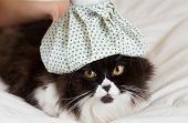 picture of hot water  - Persian cat flu and a hot water bottle on head - JPG