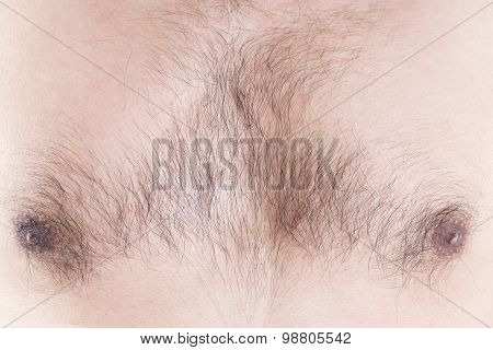 Chest Of A Man With Hair