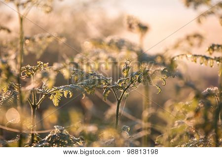 Growing Fern In Sunrise Sunlight