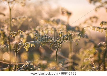 Growing Fern In Sunrise Sunlight