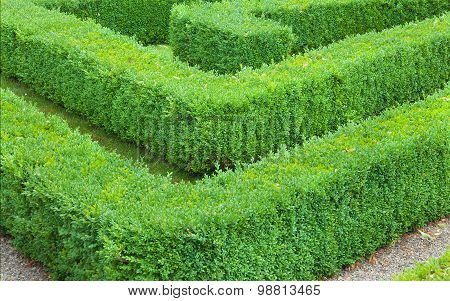 Hedge Maze Showing A Corner Detail