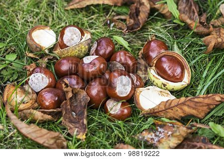 Heap of chestnuts