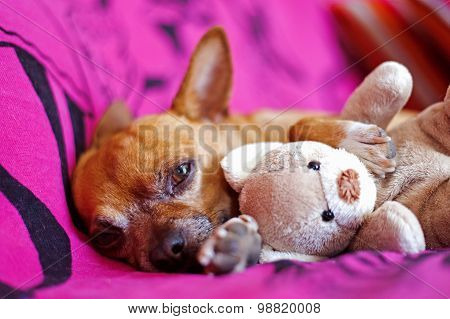 Dog And Peluche