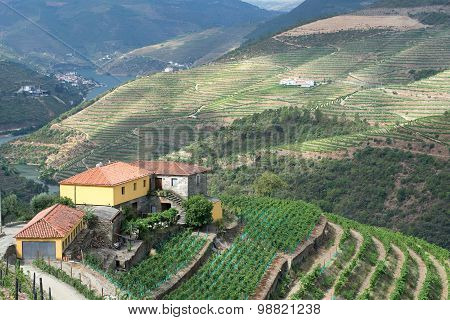 A terraced vineyard in the Douro Valley