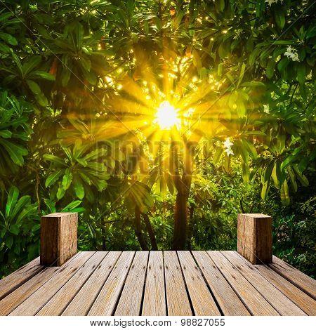 Wooden Skywalk In Natural Garden