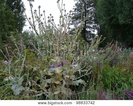 Garden With Flowers And Thistles