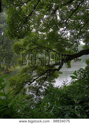 Forest Tree Branch By Lakeside Landscape
