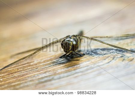 Dragonfly Hanging Around