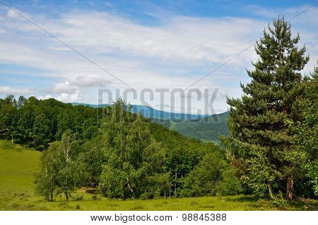 Forest In The Mountains
