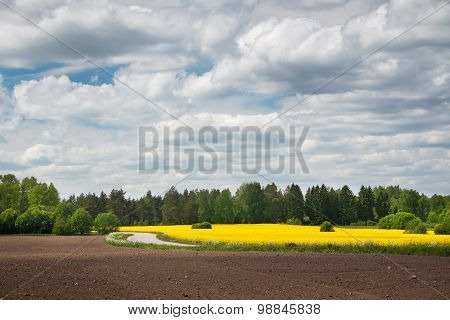 Rapeseed field and road with beautiul sky