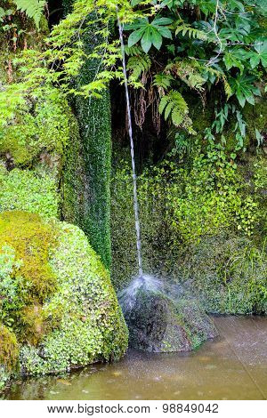 Stream Of Water In A Pond With Green Ferns