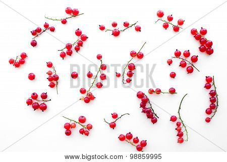background of scattered twigs with red currants, isolated