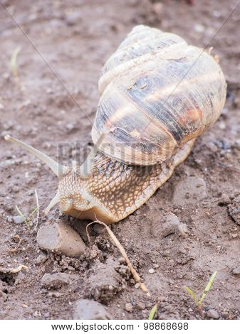 questioningly snail crawling on arid land