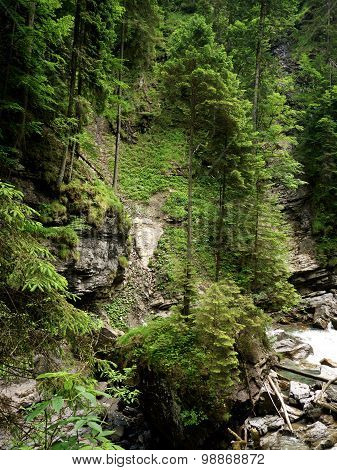 Trees Growing On The Rocks In The Breitachklamm, Germany