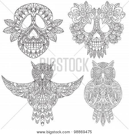 Owl and skull sketchs