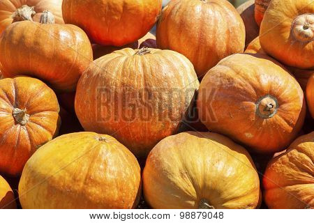 Pile Of Pumpkins On The Farmer Market