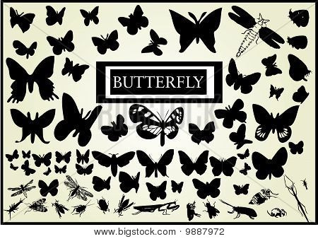 Butterfly-vector collection