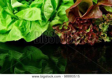 Many Varieties Of Lettuce On Black On Top