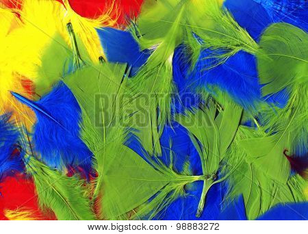 Multi coloured bird feathers background
