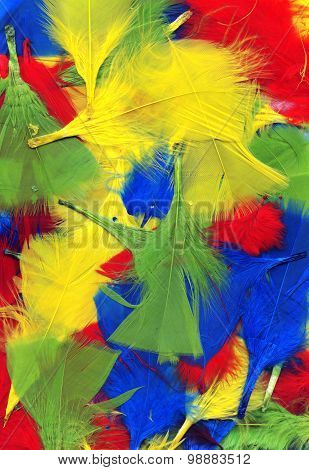 Multi coloured feathers background