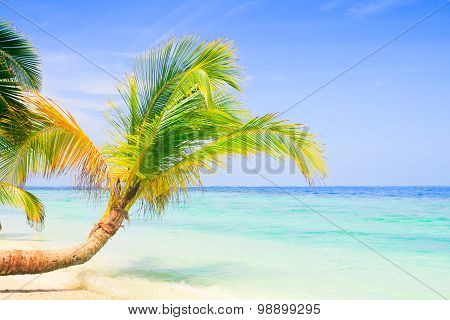 Exotic palm trees on white sand beach