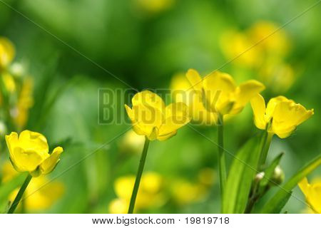 yellow flowers on green abstract background, blurred colors