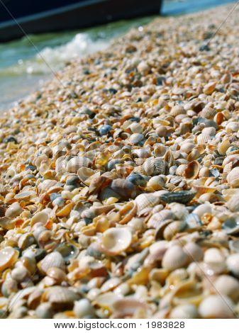 Wet Shells Beach