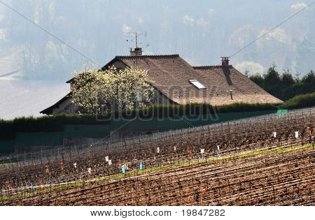 House in the Champagne vineyard