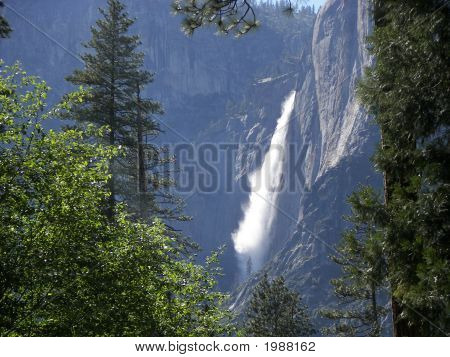 Distant Yosemite Falls Through Trees
