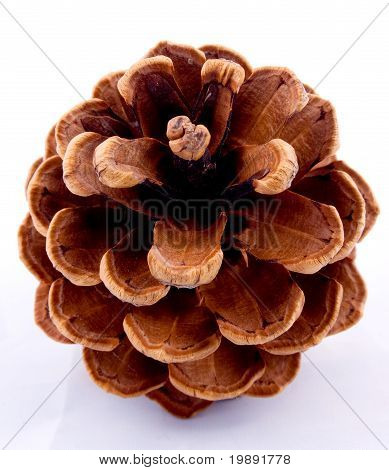 Pine Cone From Above
