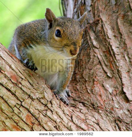 Currious Squirrel