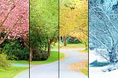A tree lined street, photographed in all four seasons from the same location. Spring, Summer, Fall,  poster