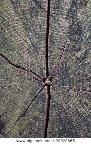 Cracked Wood Grain Texture