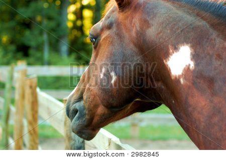 Cavalo em um campo