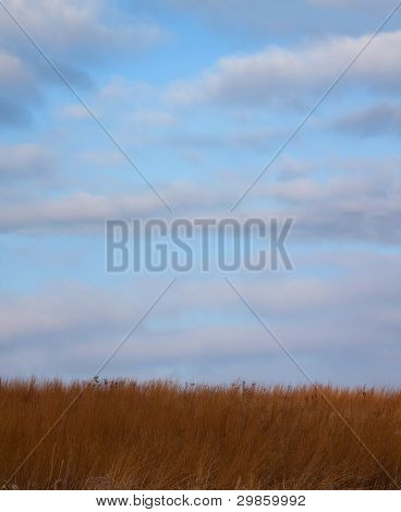 Blue sky in a winter prairie meadow