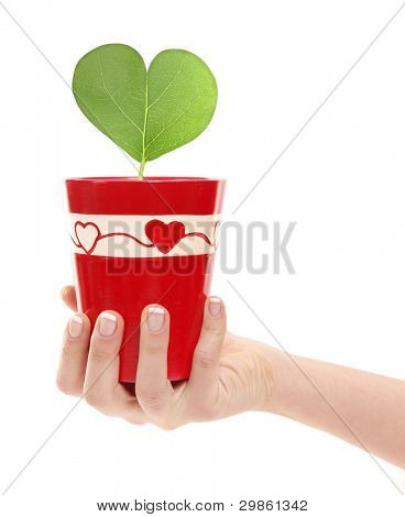 Woman is holding plant with heart shaped leaf in flowerpot