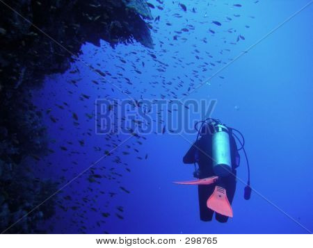 Diver And Reef