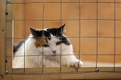 Very Beautiful, But Lonely Sad Fluffy Cat, Lying On Cage In Shelter And Waiting For Owner With Home. poster