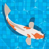 foto of koi  - koi carp swimming in tiled blue pool - JPG